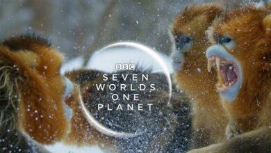 Seven Worlds, One Planet İndir Türkçe Dublaj 1080P