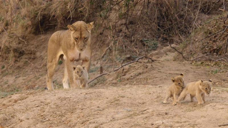 National Geographic En Vahşi Avcılar Belgesel Seti İndir